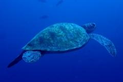 Maldivas Vela 24 Noviembre 2018