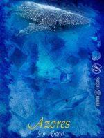 Azores-2014-1p - copia